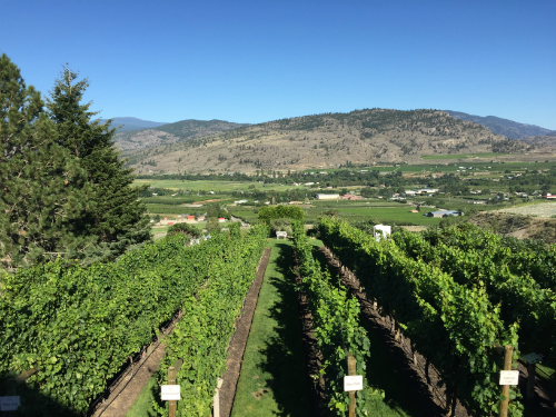 Traversing the Okanagan Valley: Tinhorn Creek & Covert Farms